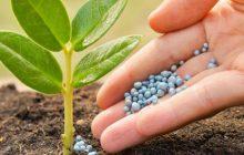 تولید گوگرد تابستانه ابتکار یک شرکت کرمانی برای مهار آفت گیاهان